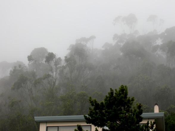 Fog over Forest Knolls