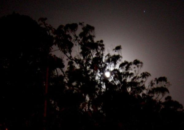 Forest Knolls Moonrise