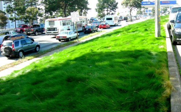 furry grass