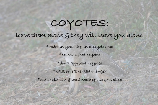 coyote poster11