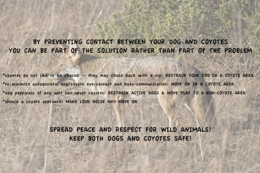 coyote poster21