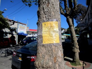 two trees to be cut down