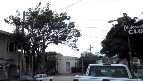 two trees saved in West Portal