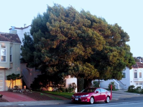 this tree 2
