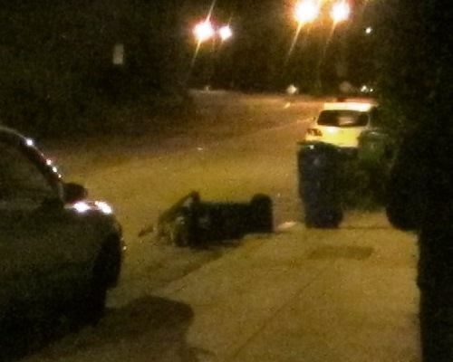 trashcan with racoon