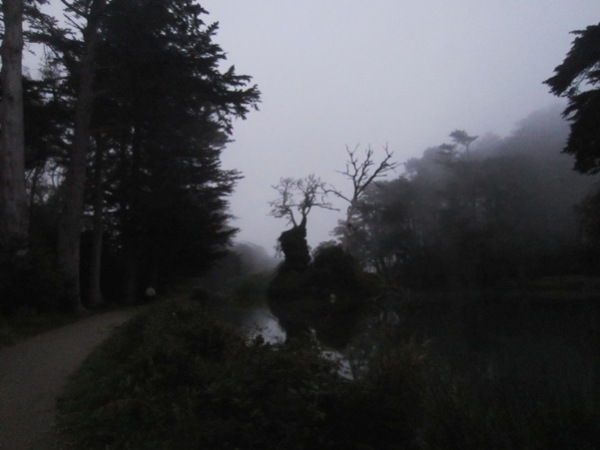 twlight tree