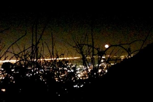 moon through thorn bush
