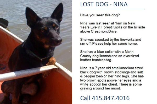 nina lost dog poster