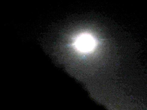 moon above eucalyptus forest