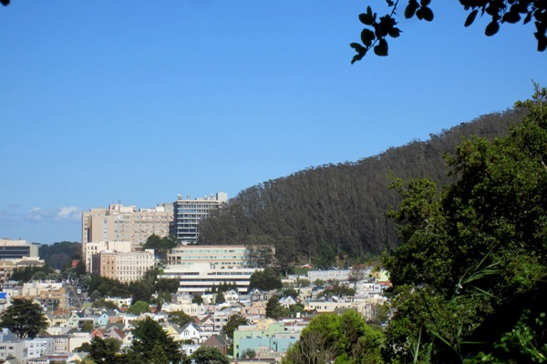 sutro forest and UCSF