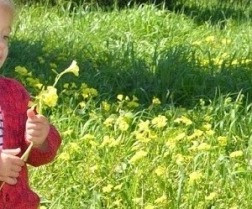 toddler holding oxalis