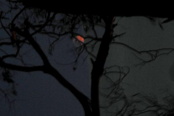 supermoon eclipse 7.47 pm