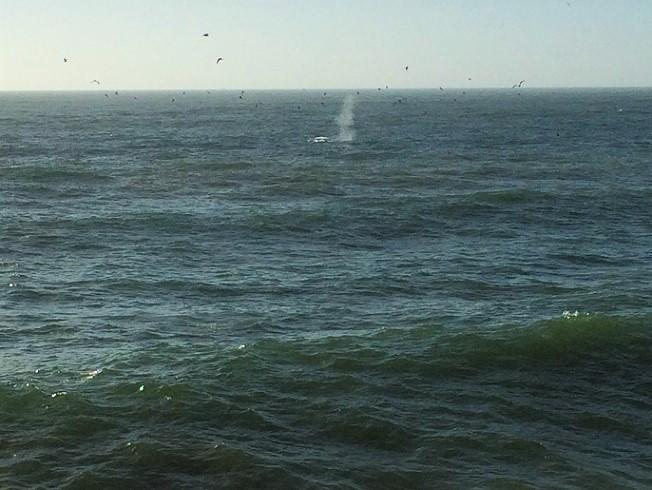 whale spout_4867
